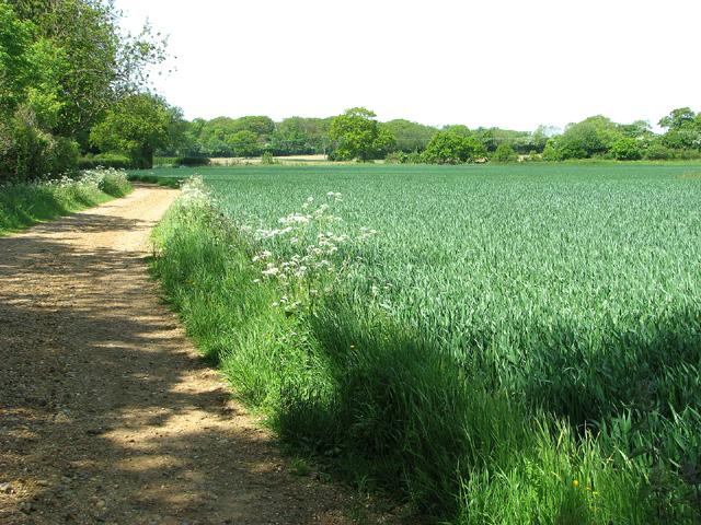 Footpath to Raveningham Road