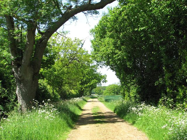 Boot's Lane to Raveningham Road
