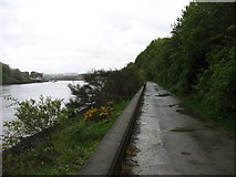 NZ2863 : The Hadrian's Wall Path beside the River Tyne by David Purchase