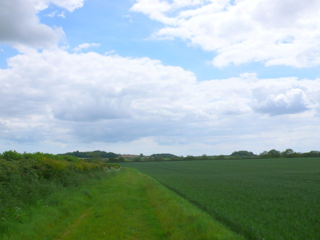Field margin near Winterborne Zelston.