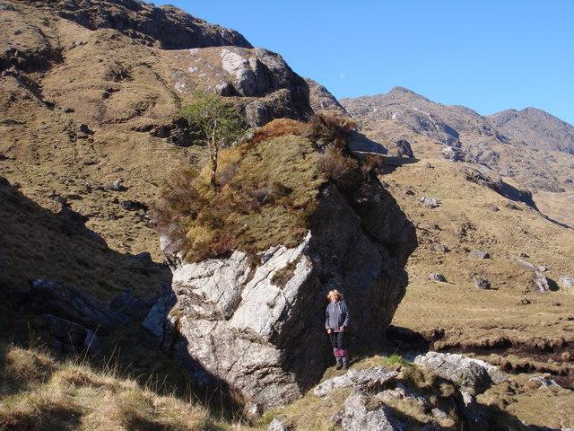 Mossy boulder with rowan