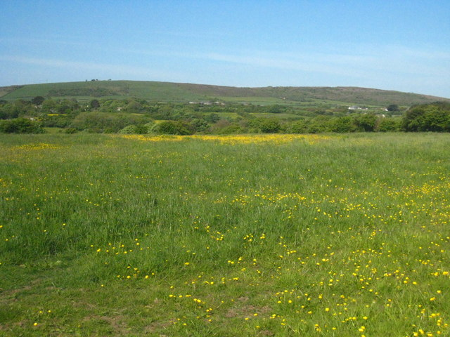 Field of buttercups at Wheal Vor