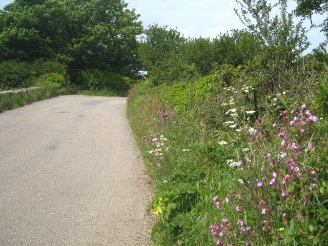 Spring flowers on the verge in Rospeath Lane