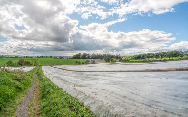 Crops under plastic sheeting, south of Pictstonhill