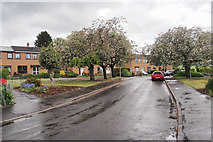 NO1325 : Goshen Crescent, Scone by Rob Burke