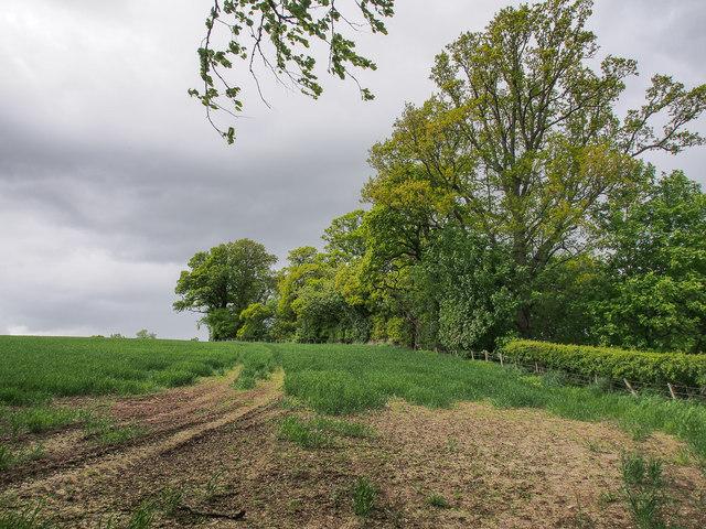 Field north-west of Bonhard