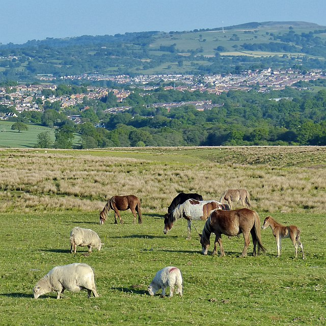 Horses and sheep grazing on Gelligaer Common