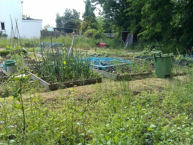 Urban allotments in Haslemere Avenue