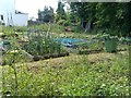 TQ2572 : Urban allotments in Haslemere Avenue by David Martin