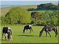 SO1201 : Horses grazing near Deri by Robin Drayton
