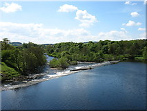 NY9170 : The River North Tyne at Chollerford by David Purchase