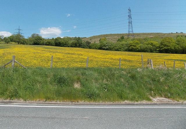 Yellow field east of Brynmawr