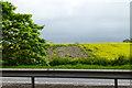 NZ4406 : Patchy rape field by David Lally