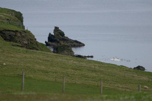 Dead whale, Ore Wick, Uyeasound