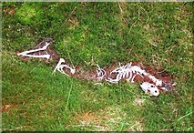 NT1126 : Skeleton by the track, Great Hill forest by Jim Barton