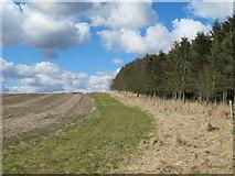 NZ0266 : Plantation edge near Brockhole Burn by Mike Quinn
