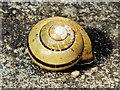 J3874 : Snail, Belfast (2) by Albert Bridge