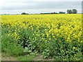 SE7618 : Edge of a field of oil seed rape by Christine Johnstone