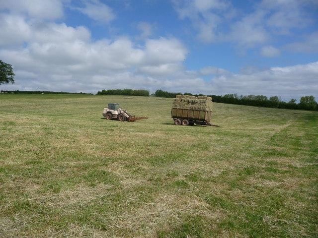 Hay meadow in the Trothy Valley near Dingestow in June