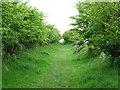 NY4861 : The Hadrian's Wall Path follows a 'green lane' by David Purchase