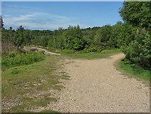 SU8565 : Sandy paths by Alan Hunt