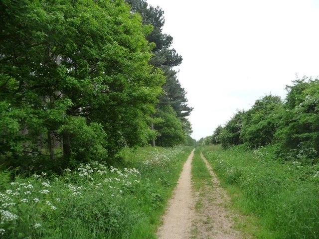 Track along the western edge of Haywood Oaks