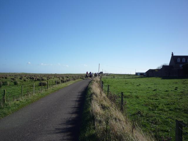 Horses at Goswick