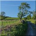 SO1201 : Minor road near Deri by Robin Drayton