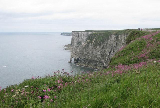 Clifftop flora, Bempton Cliffs