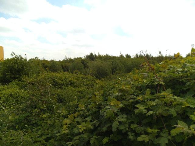 Parkfield Wasteland View