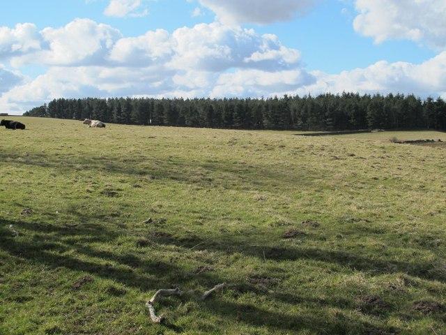 Farmland and Shildonhill Plantation (2)