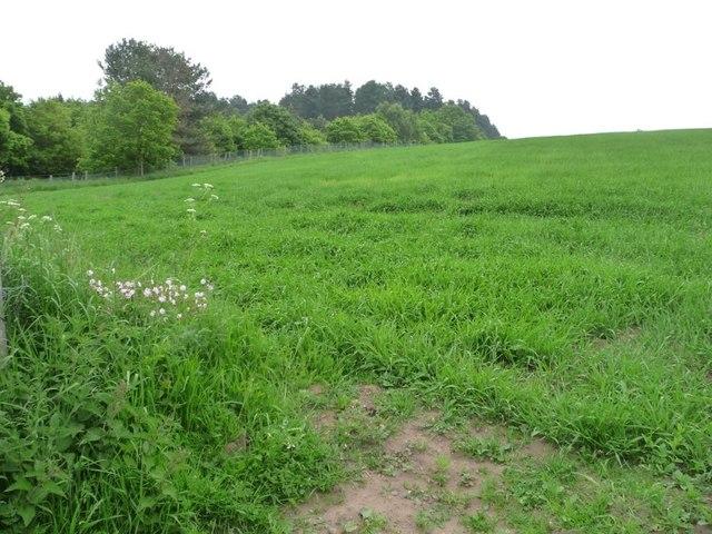 Grassy field south of Haywood Oaks