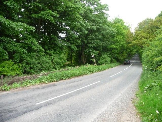 The road through Haywood Oaks