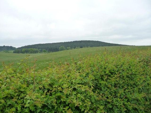 Rolling farmland east of Salterford Lane