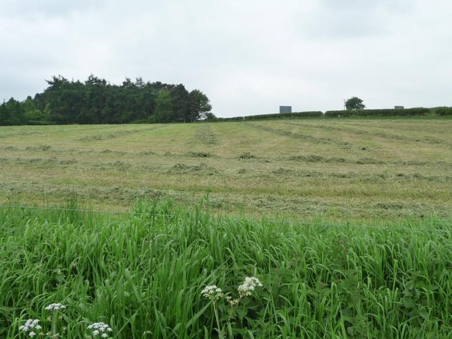 Cut grass in a field west of Salterford Lane