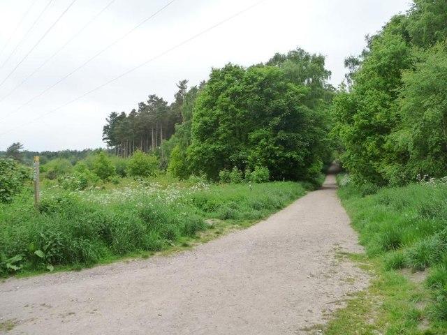 Robin Hood Way, Blidworth Woods