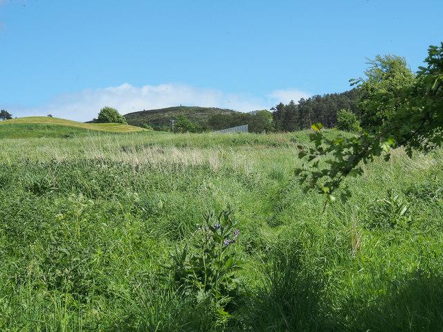 Rough pasture, north-east of Bonhard House