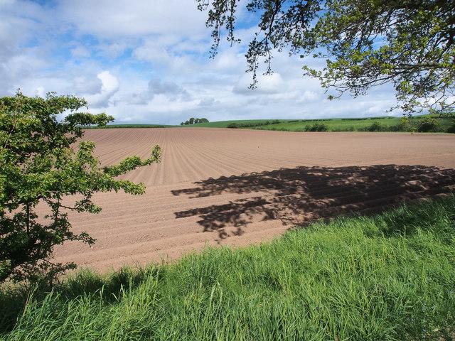 Sown field, east of Balgavie