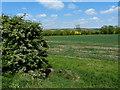 SP7485 : Farmland near the Brampton Valley Way by Mat Fascione
