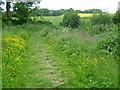 TQ6452 : Path through wild flowers alongside Court Lodge Shaw by Marathon