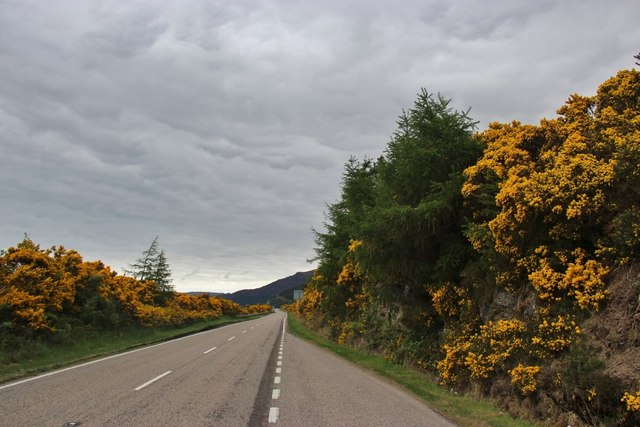 A835 passes through whin in full bloom