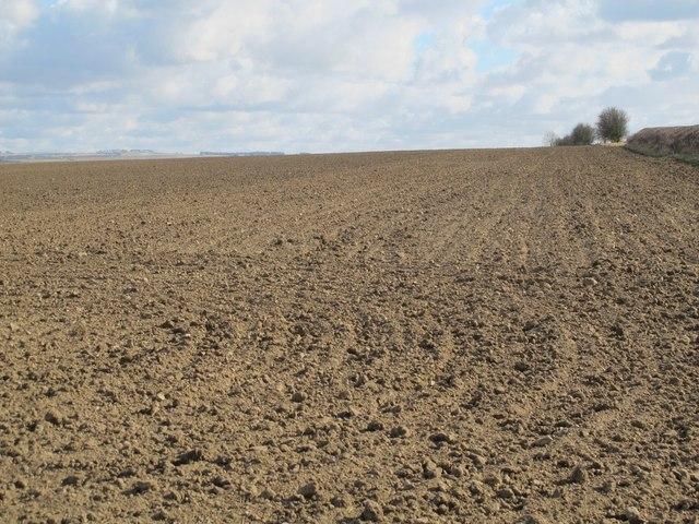 Farmland east of Cobbler's Lane
