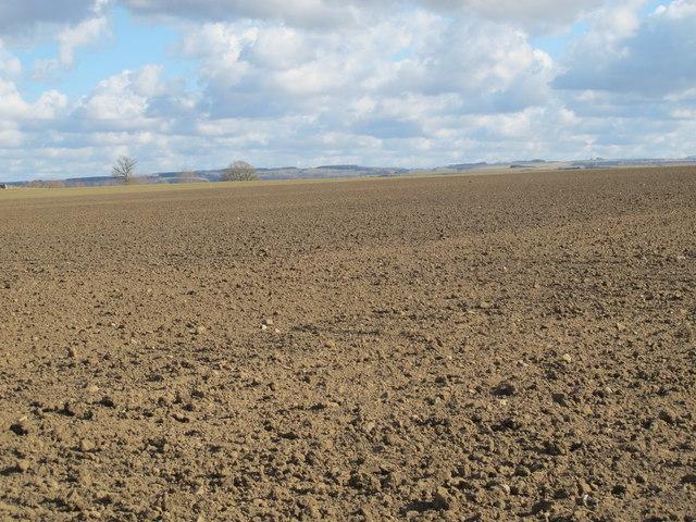 Farmland east of Cobbler's Lane (2)