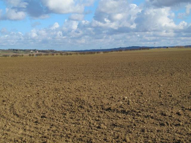 Farmland south of Bogle Burn