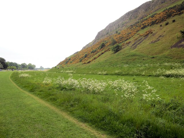 Flowers in Holyrood Park