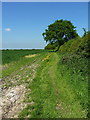 SJ8159 : A fieldside footpath by Richard Law