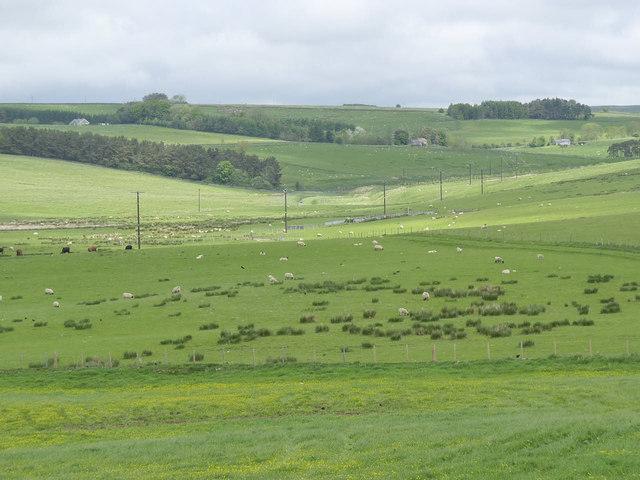 Northumbrian farmland
