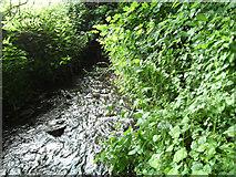 SE4832 : Stream emerging from tunnel under railway line at South Milford by derek dye