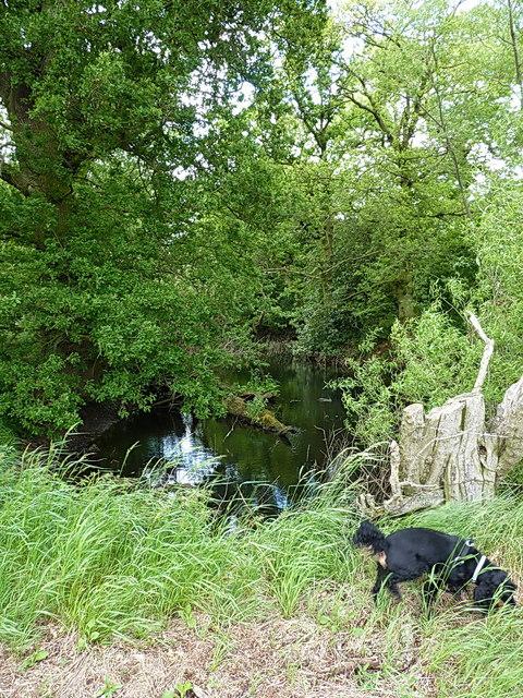 Tree-choked pond