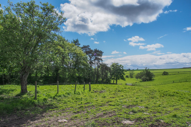 Trees and pasture at Mill of Bonhard